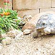 nana's turtle.